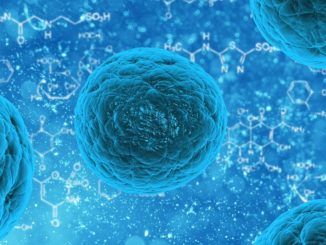 stem cells cure diseases